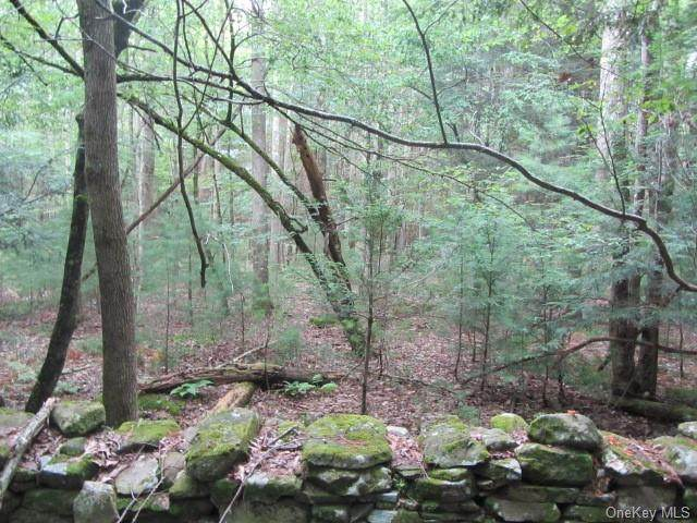 Irish Cape Road, Ellenville, NY 12428 (MLS #H6112953) :: Cronin & Company Real Estate