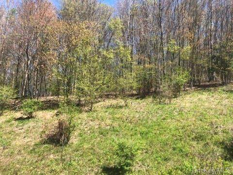30 Miller Heights/Old Route 17, Roscoe, NY 12776 (MLS #H6114805) :: Frank Schiavone with William Raveis Real Estate