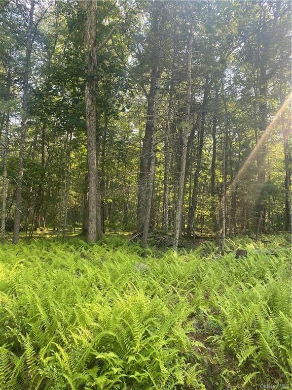 Mud Pond Road, Highland Lake, NY 12743 (MLS #H6139595) :: Goldstar Premier Properties