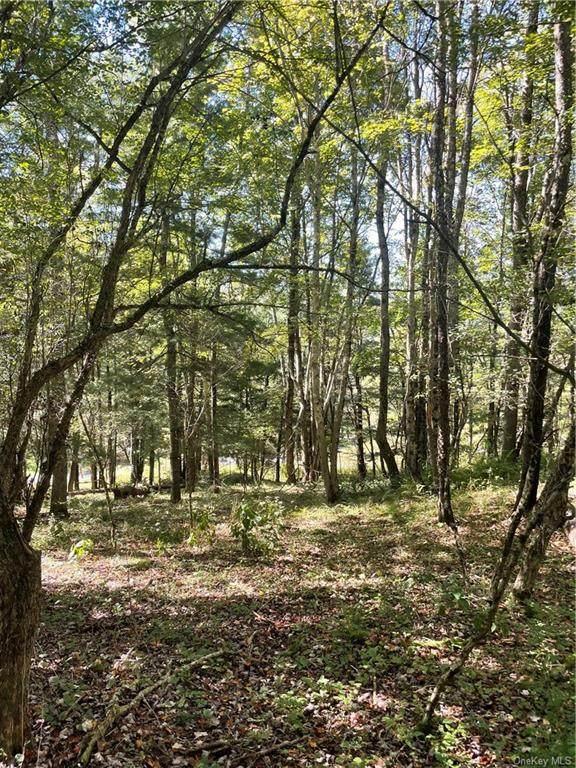 White Roe Lake Road, Livingston Manor, NY 12758 (MLS #H6143667) :: Corcoran Baer & McIntosh