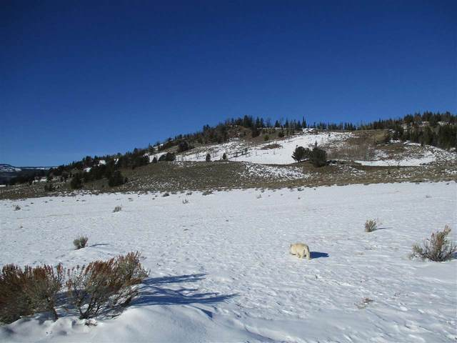 Lot 66 Long Creek Subdivision, Dubois, WY 82513 (MLS #20200718) :: RE/MAX The Group