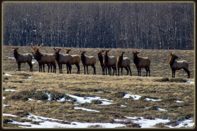 Lot 25 Block 8 Aspen Meadows, Elk Mountain, WY 82324 (MLS #20191122) :: RE/MAX The Group