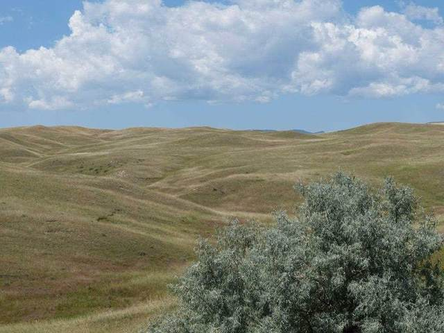 66+acres on.. Elsom Ranch Rd, Buffalo, WY 82834 (MLS #20192610) :: RE/MAX The Group