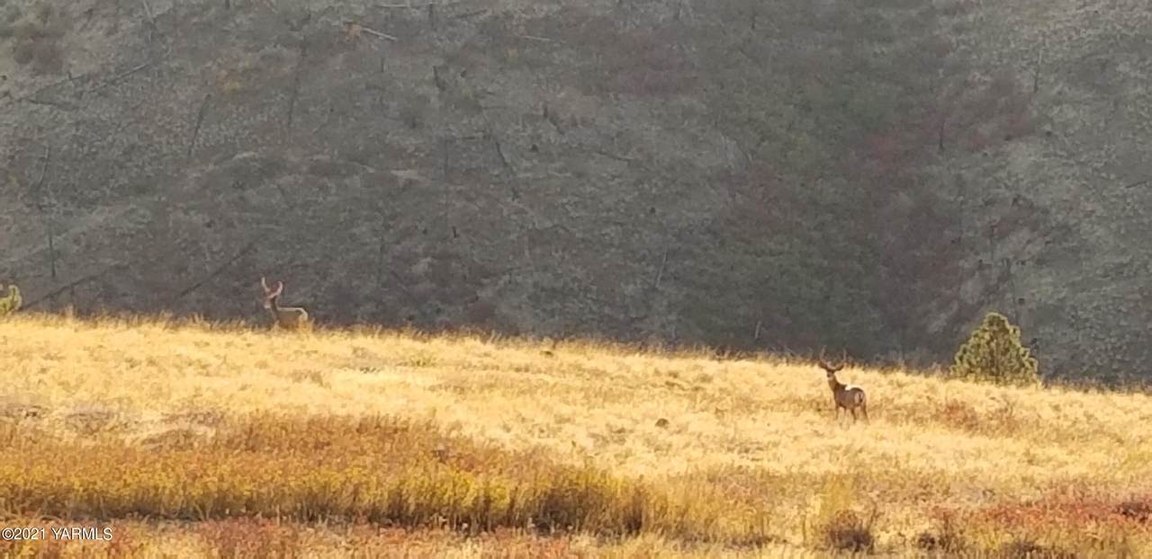TBD Dry Pataha Creek - Photo 1