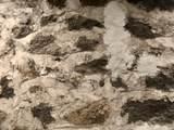 1811 Yakima Ave - Photo 94