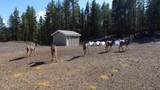 5710 Fork Rd - Photo 39